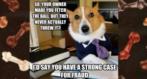 meet-lawyer-dog-fetch