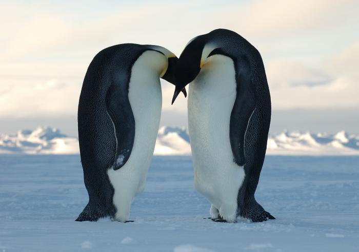 emperor_kiss