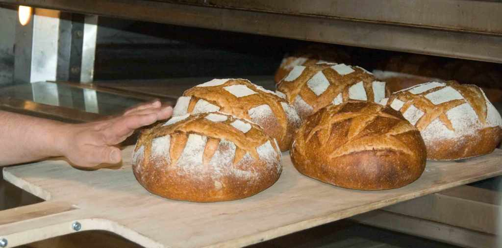 Freshly_baked_bread_loaves
