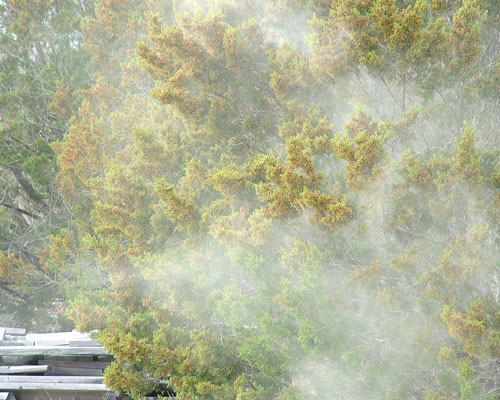 pollenrelease