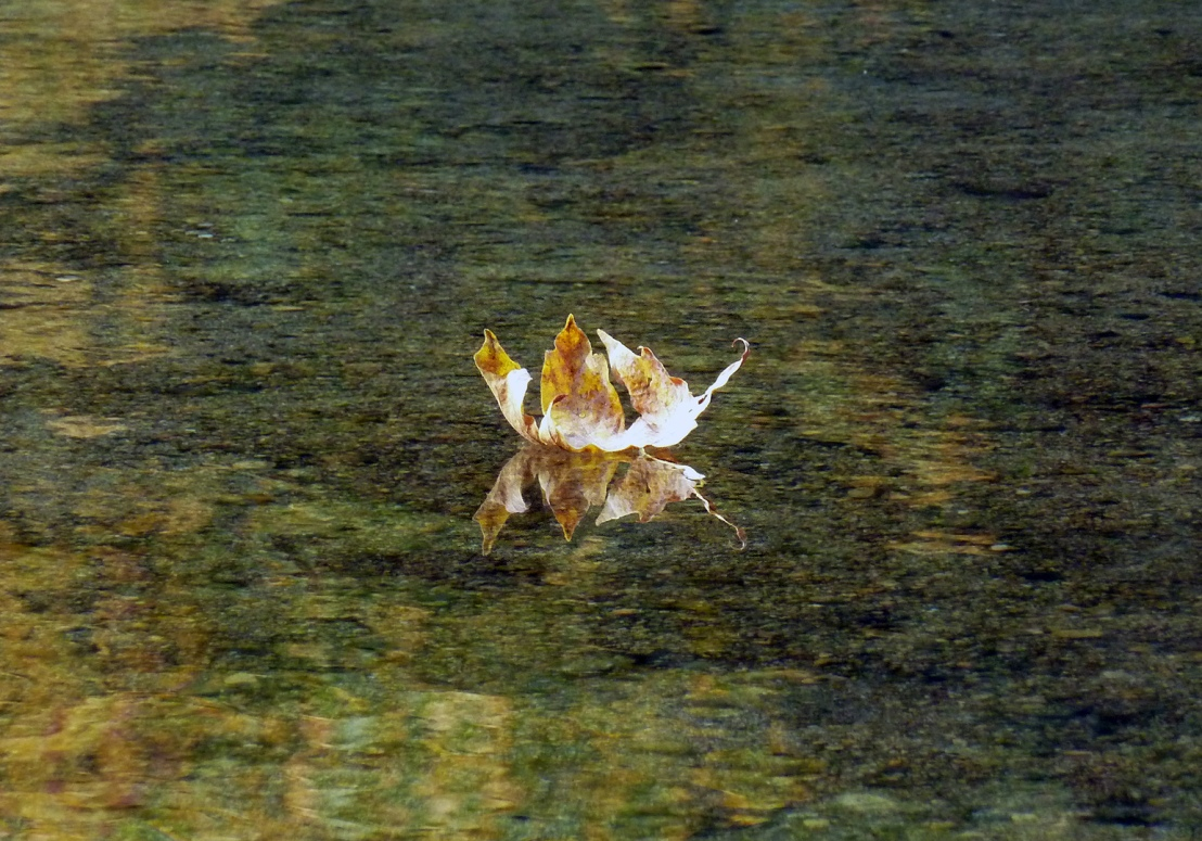 P1050478autumn-leaf-on-water.jpg